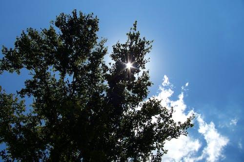 Δωρεάν στοκ φωτογραφιών με #δέντρο, γαλάζιος ουρανός, δέντρο, δραματικός ουρανό