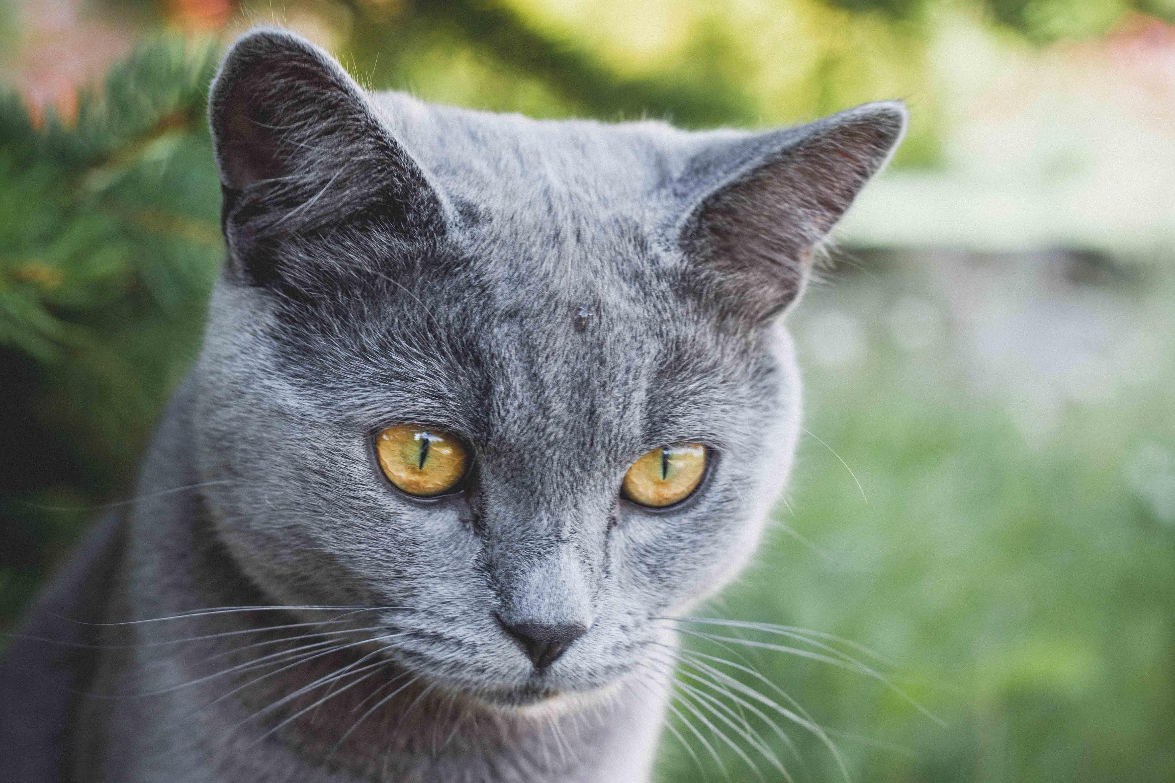 velká chlupatá kočička tumblr