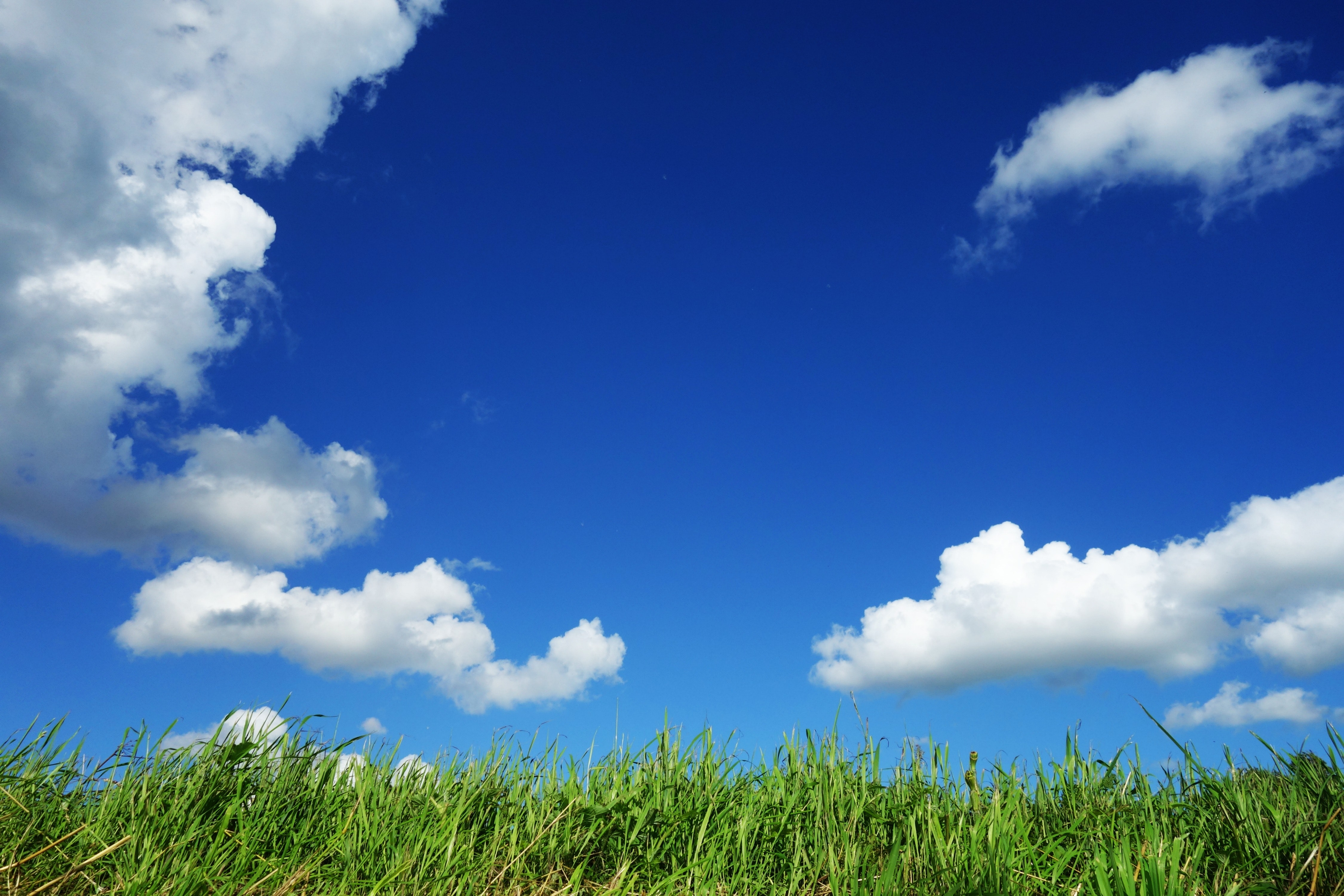 Grass Field Under Cloudy Sky · Free Stock Photo