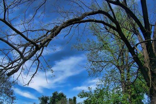 Δωρεάν στοκ φωτογραφιών με background, γαλάζιος ουρανός, δέντρο, κλαδιά