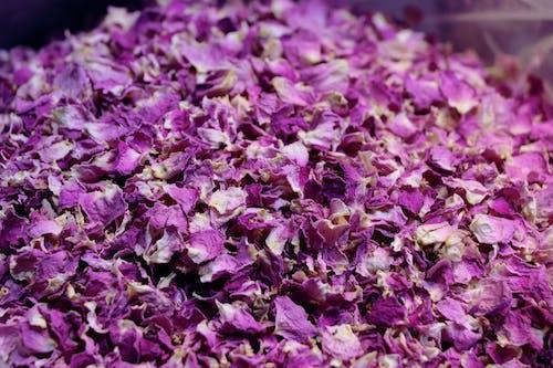 Imagine de stoc gratuită din culoare, floare roz, flori artificiale, flori de arpagic