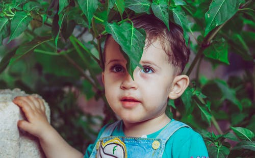 Boy Standing Under Green Leafed Plant