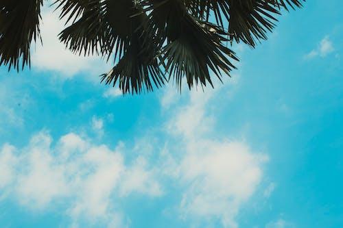 Kostenloses Stock Foto zu baum, blauer himmel, himmel, natur