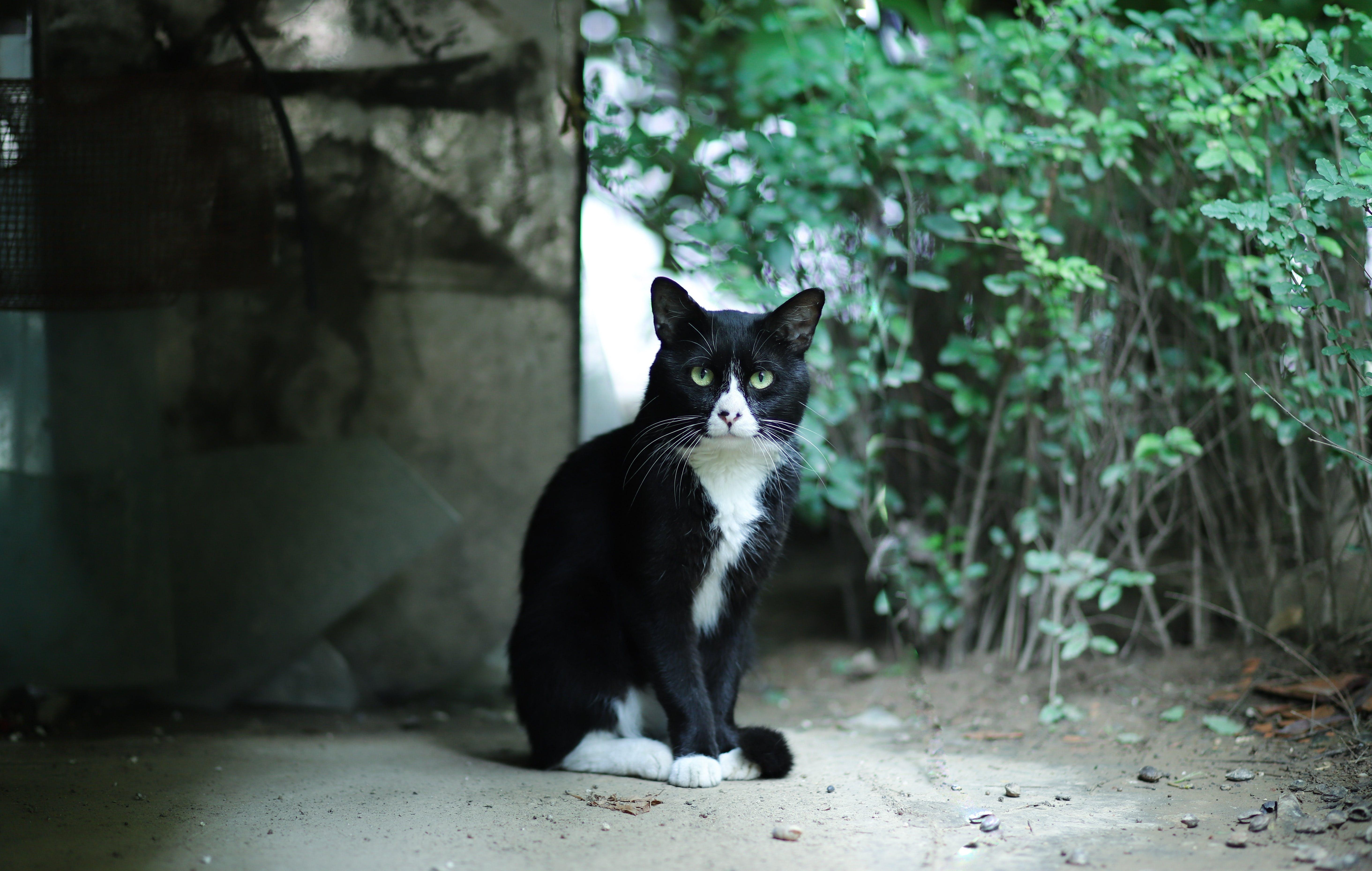 Cat Near Plants