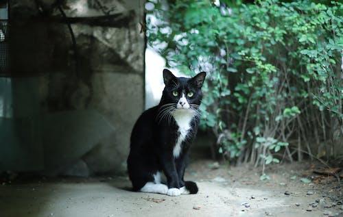 Imagine de stoc gratuită din adorabil, animal, animal de casă, domestic