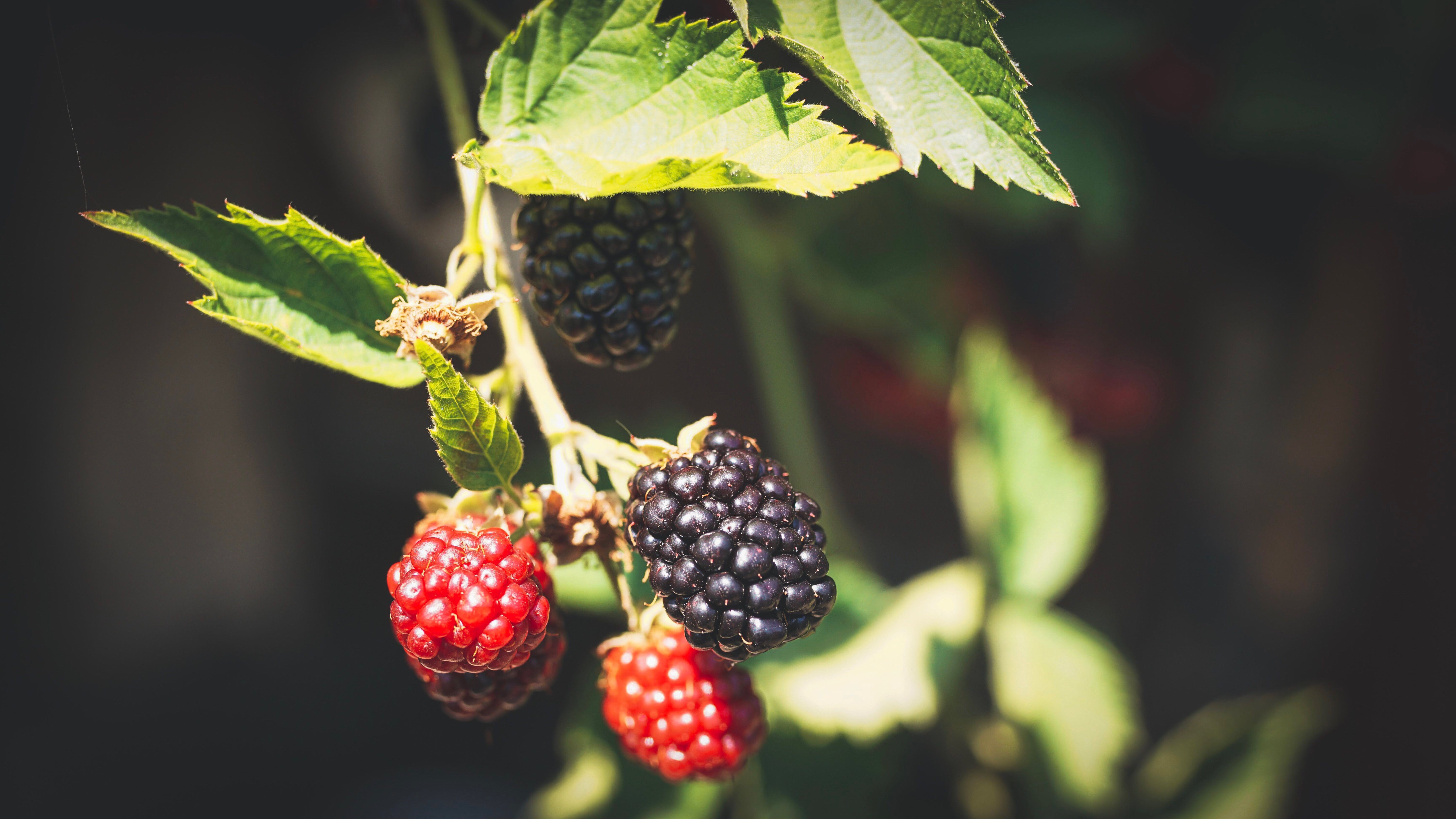 Selective Focus Photography Of Berries