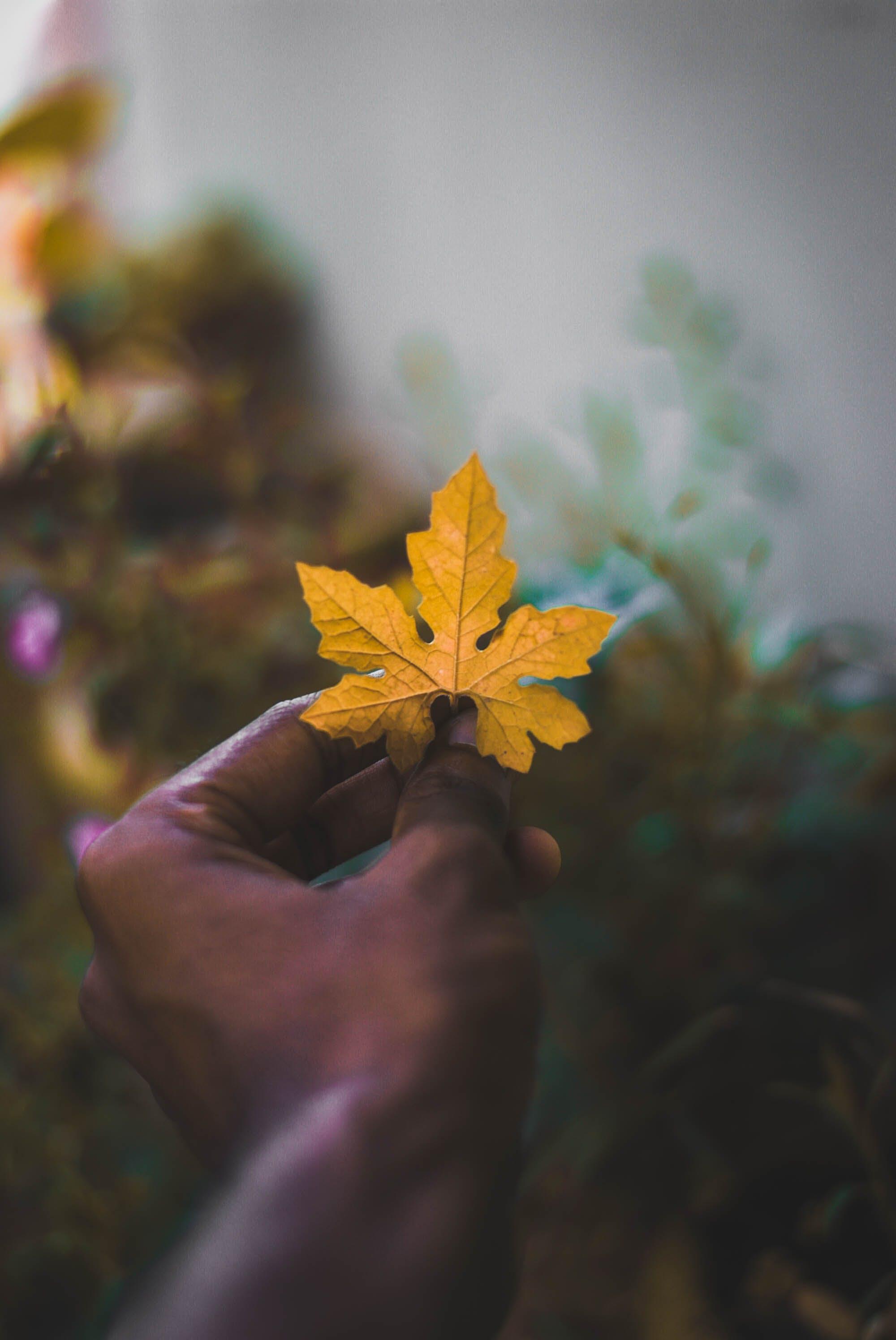 Free stock photo of autumn leaves, autumn leaf, natue