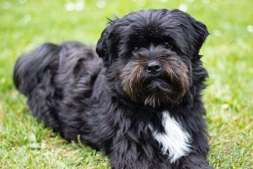 Free stock photo of adorable, animal, armchair, black