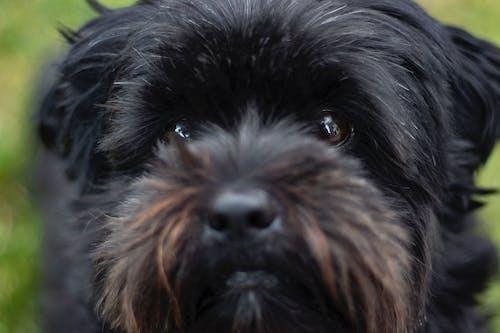 Free stock photo of adorable, animal, beautiful eyes, big eyes