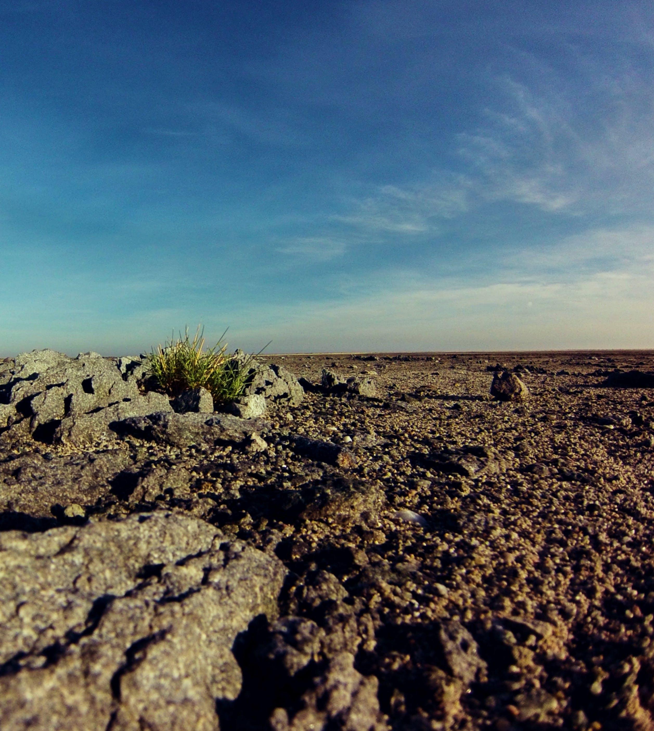 Free stock photo of africa, botswana, desert, nature