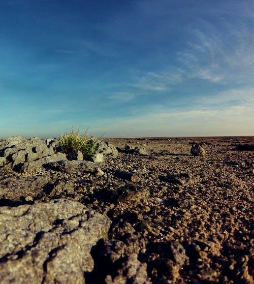 Afrika, botsvana, çöl, doğa içeren Ücretsiz stok fotoğraf