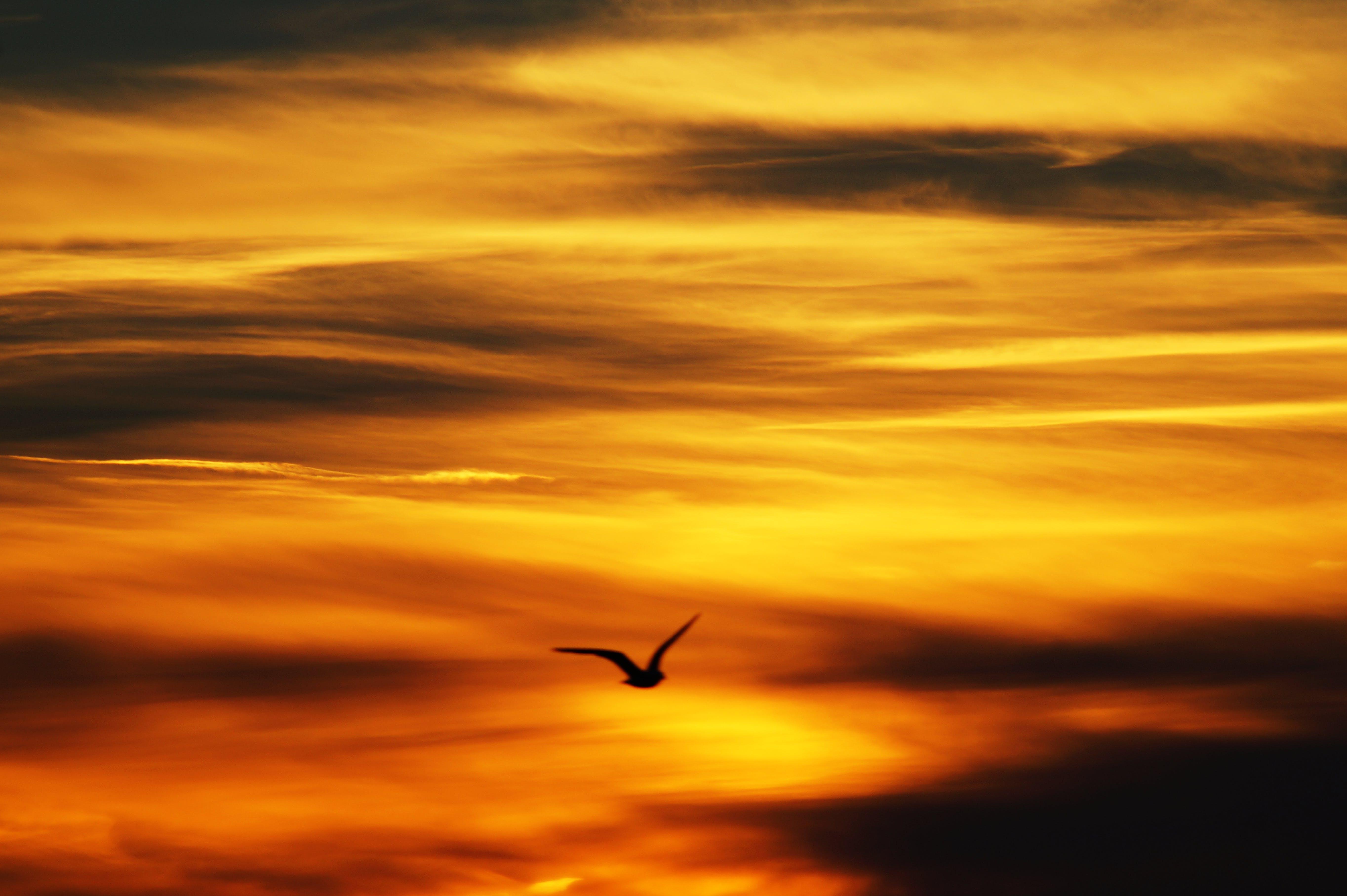 Black Bird Flying Under Yellow Sky