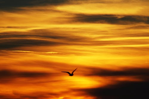 Black Bird Flying Under Yellow Sky