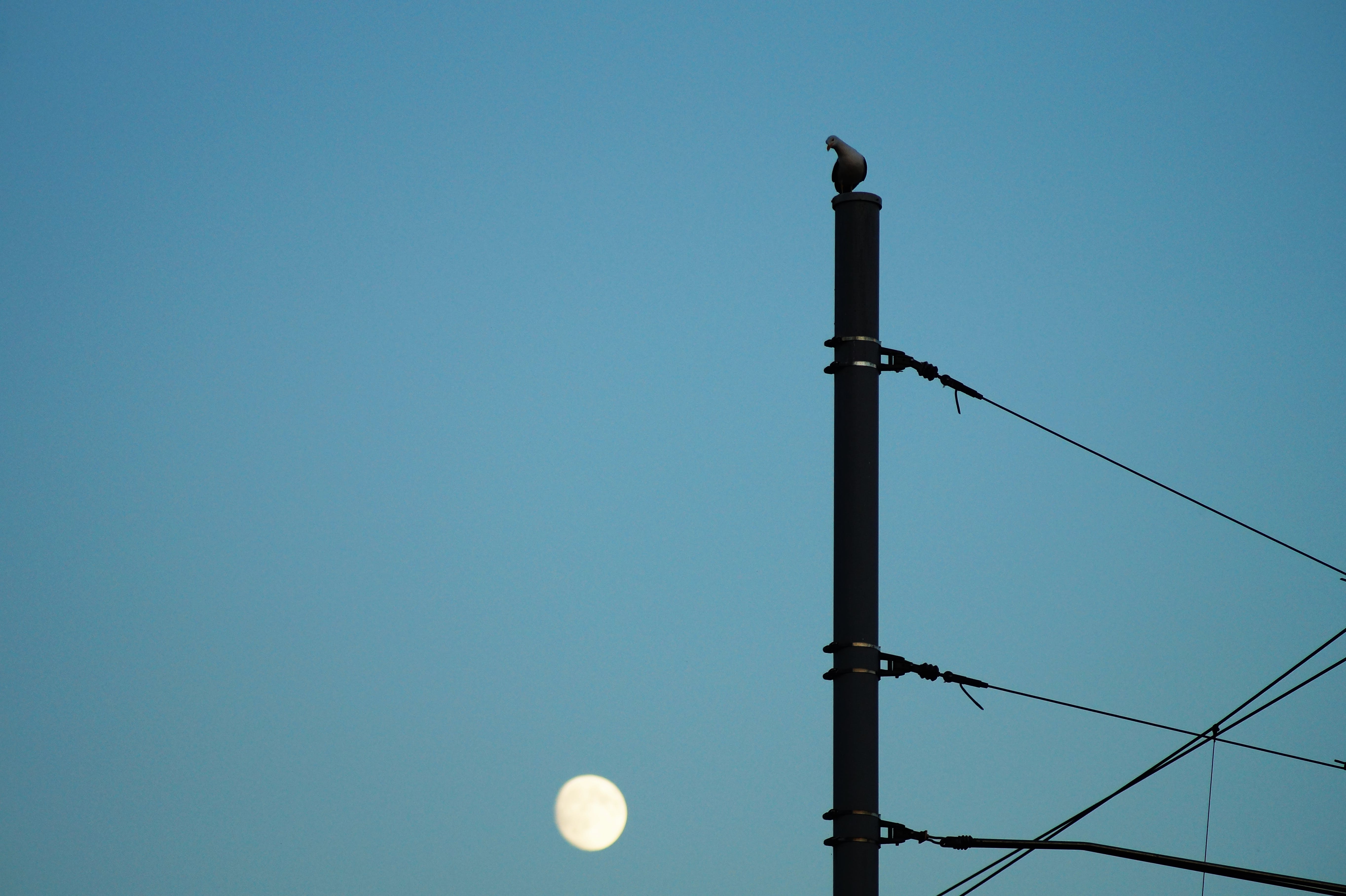 Silhouette of Bird Perching on Electric Post