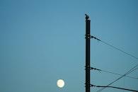 light, bird, construction