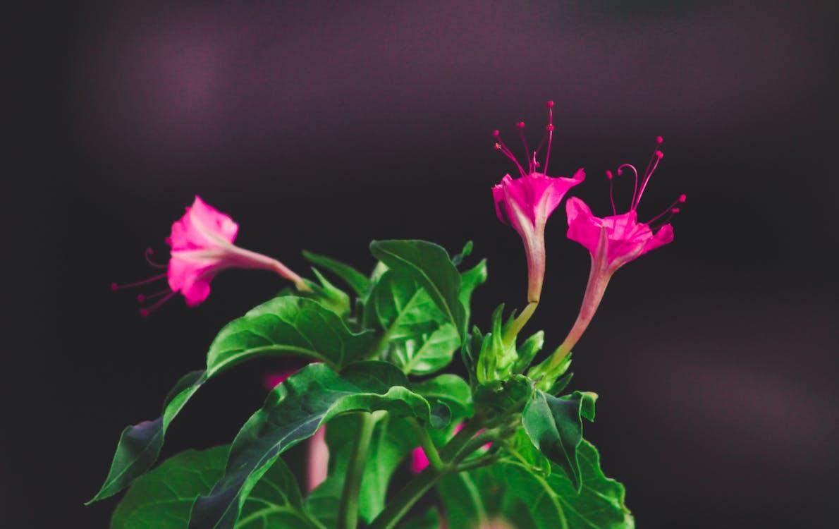 bloeien, bloemblaadjes, bloemen