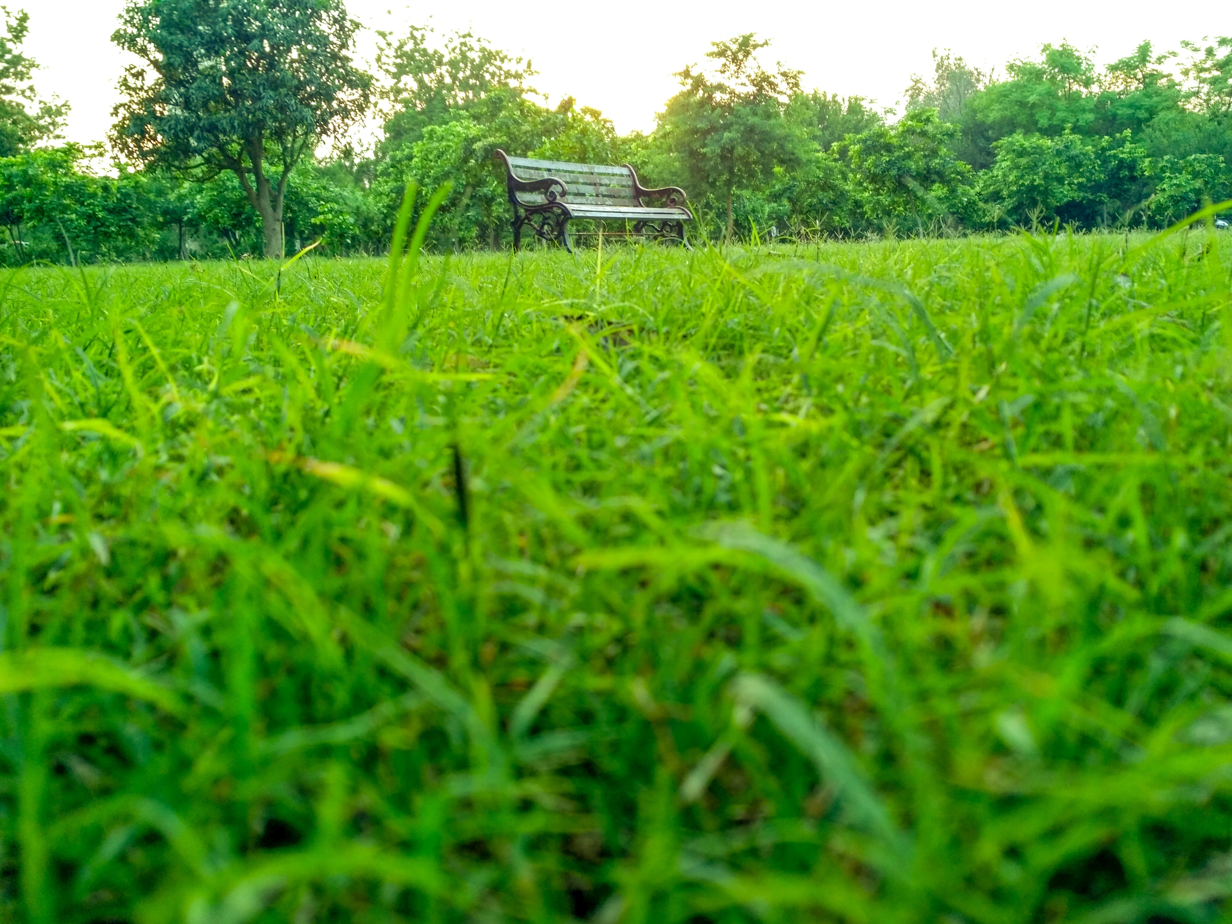 Free stock photo of #grass #banch #tablet #evening #sunset #light
