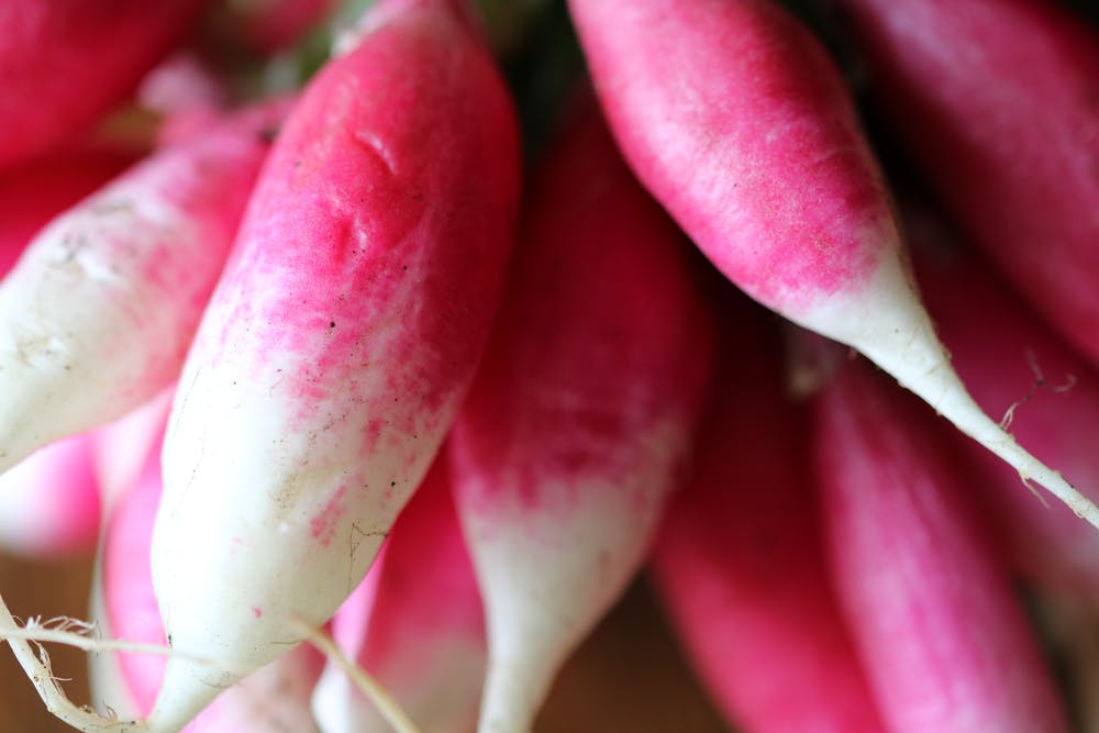 Growing Radishes | Winter Vegetables Perfect For Growing In The Cold Season