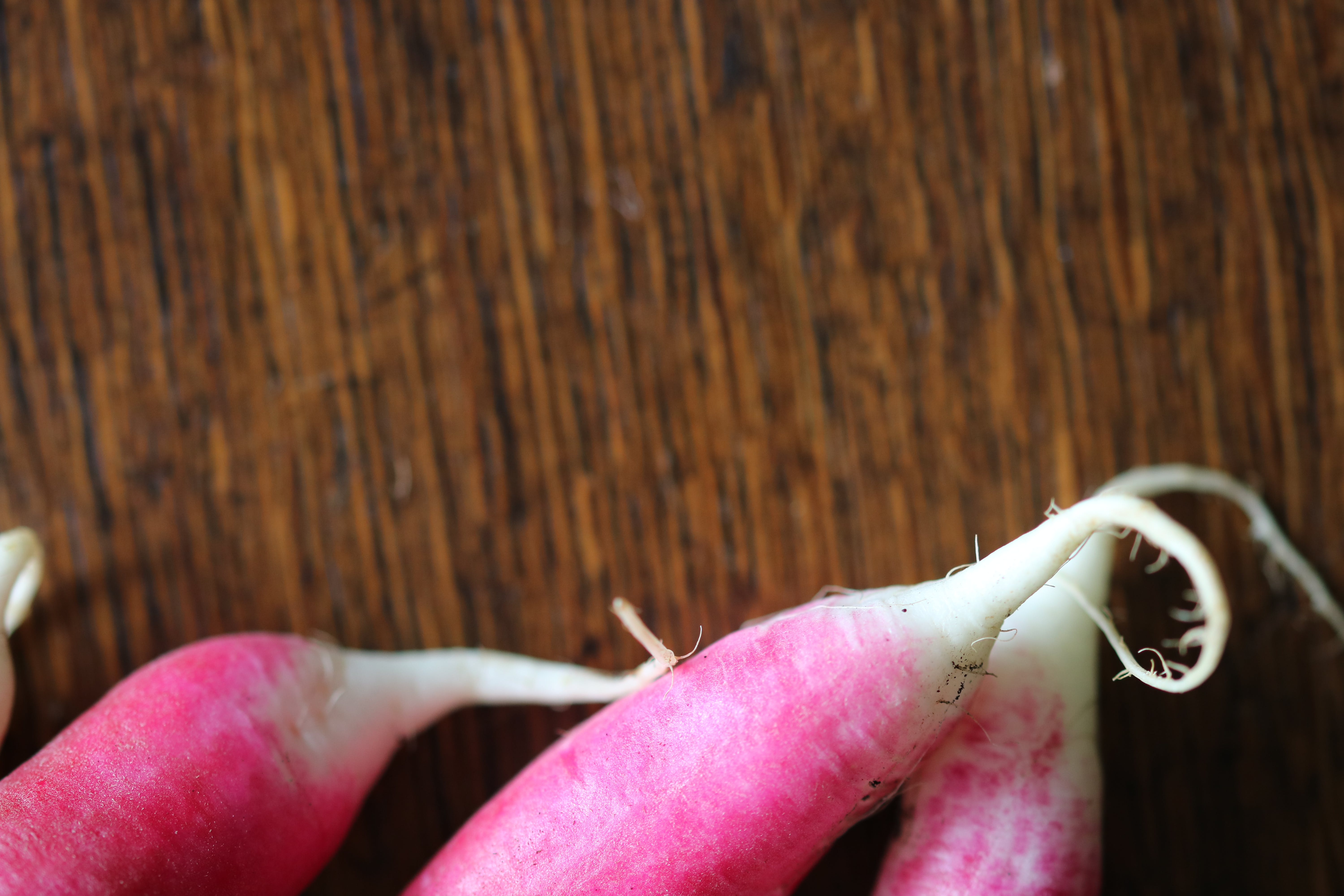 Free stock photo of red, blue, green, radish