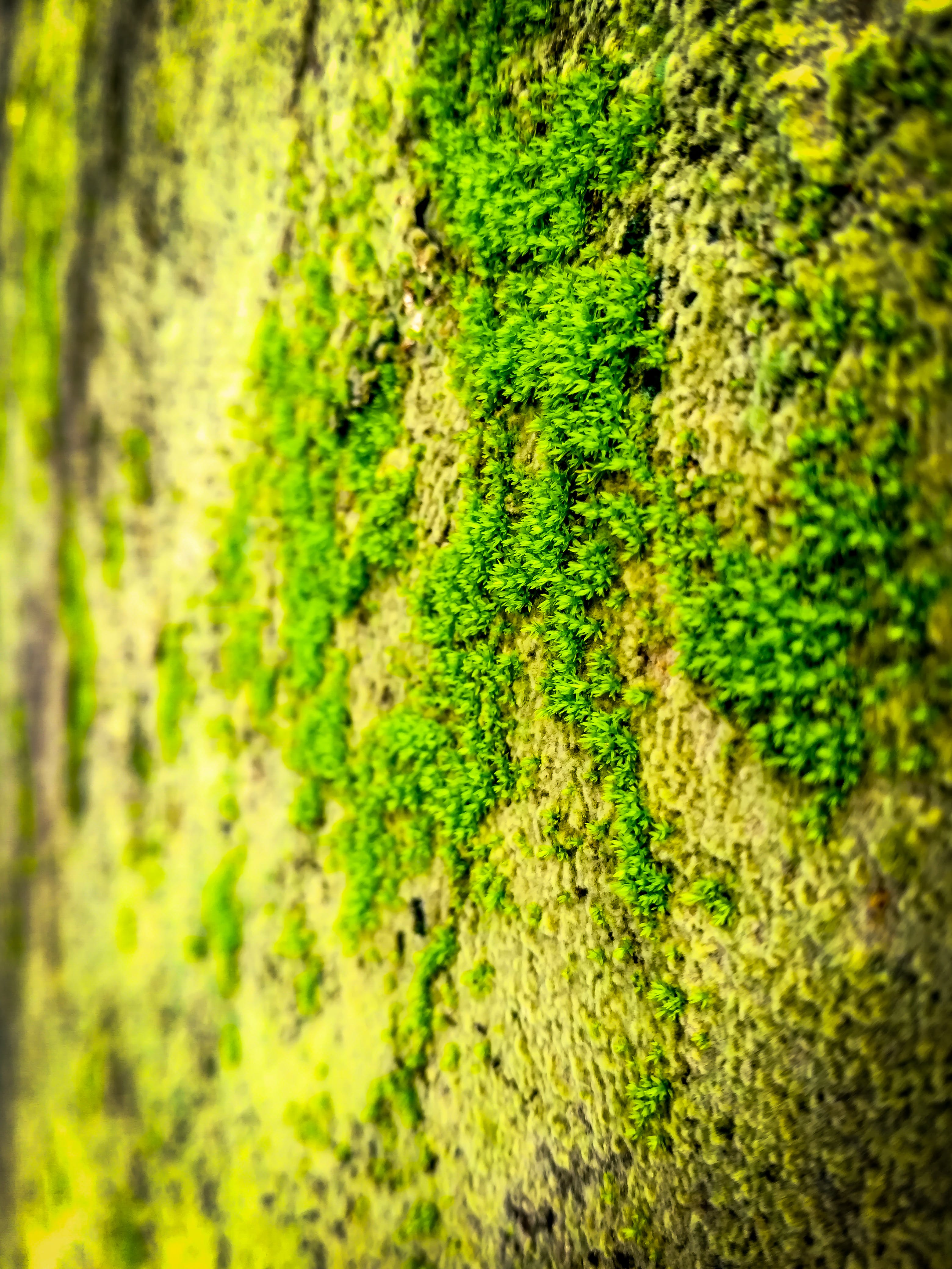 Free stock photo of fungal, green, nature, wall