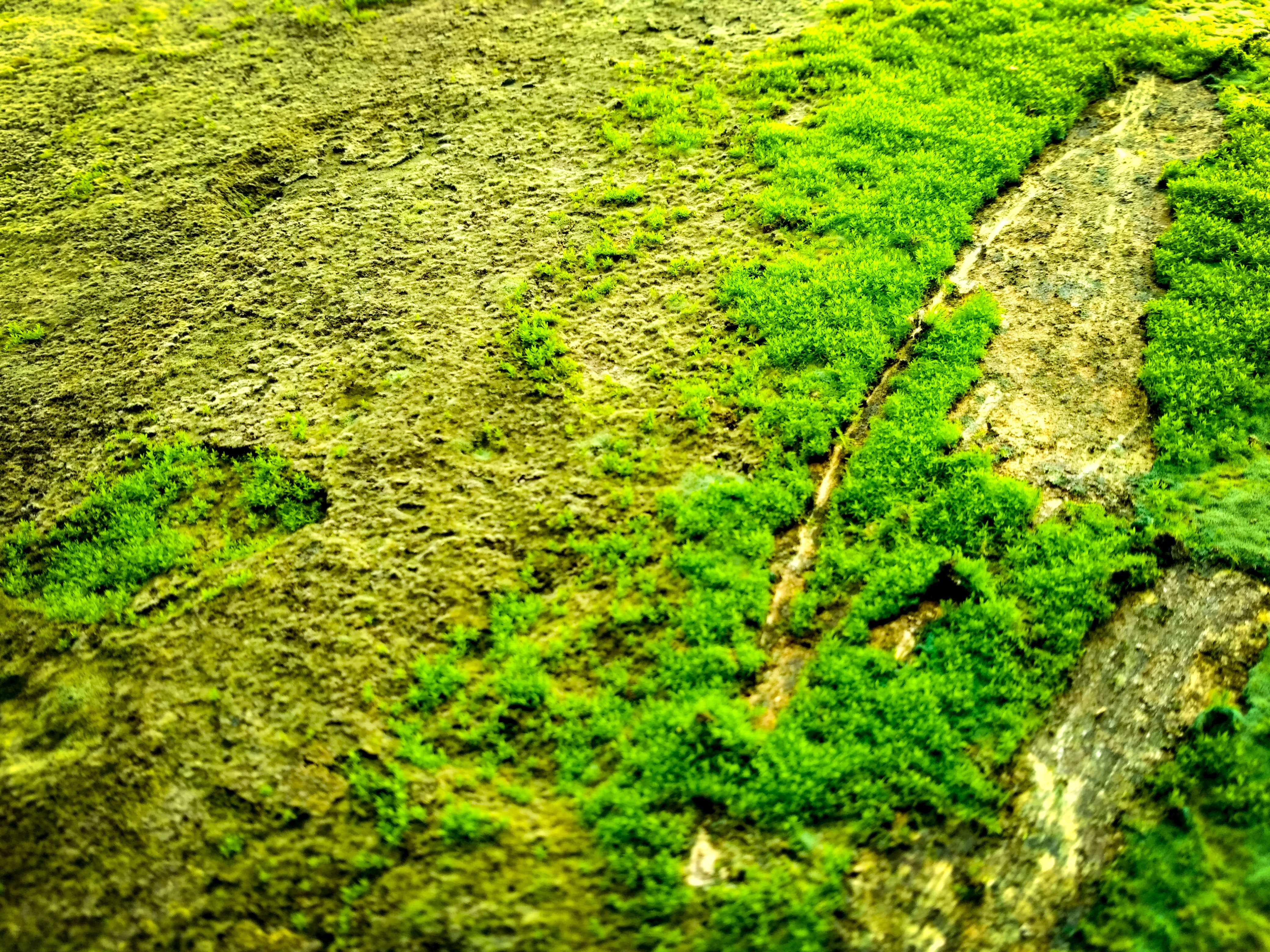 dark green plants, green wall, na