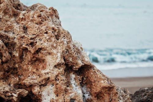 Imagine de stoc gratuită din adâncul mării, albastru, atmosferă de vară, brun