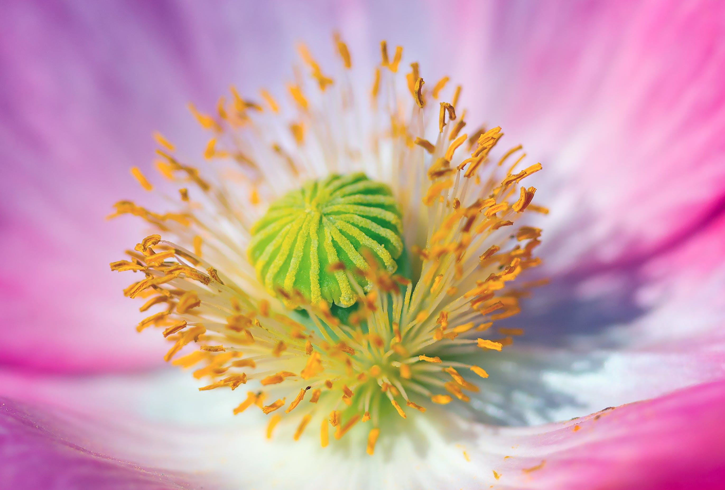 Close-Up Photography Of Flower Stigma