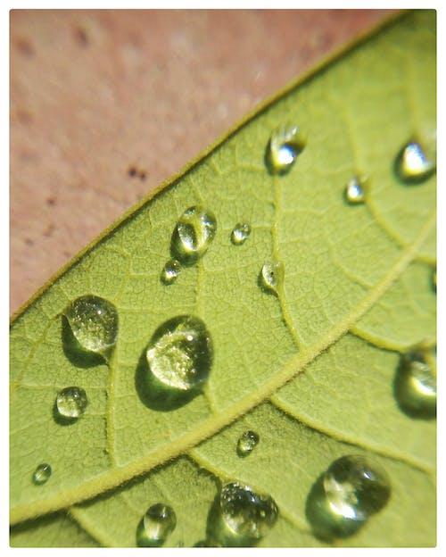 Fotobanka sbezplatnými fotkami na tému kvapka vody, kvapky, kvapky dažďa, makro