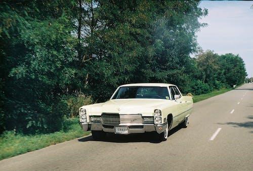 Fotos de stock gratuitas de alquitrán, arboles, asfalto, automotor