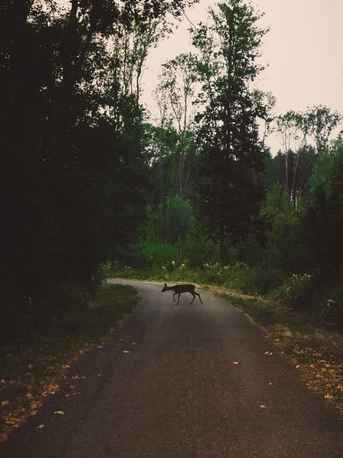 Безкоштовне стокове фото на тему «європа, дика природа, дорога, козуля»