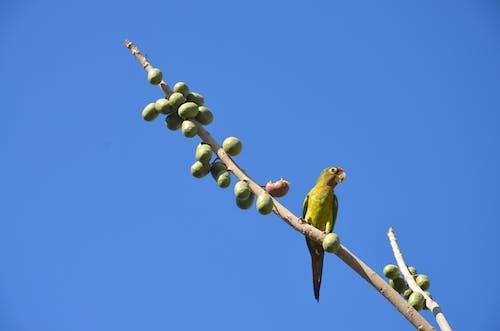 Gratis arkivbilde med #birds, #fugl, #papegøye