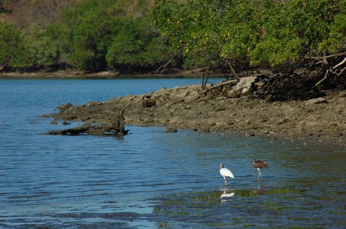 Gratis arkivbilde med #birds, #fugl, #ibis