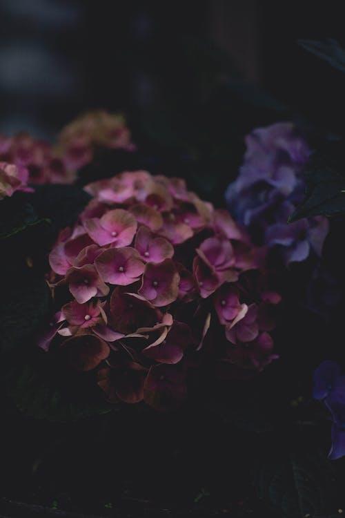 꽃, 꽃이 피는, 꽃잎, 섬세한의 무료 스톡 사진