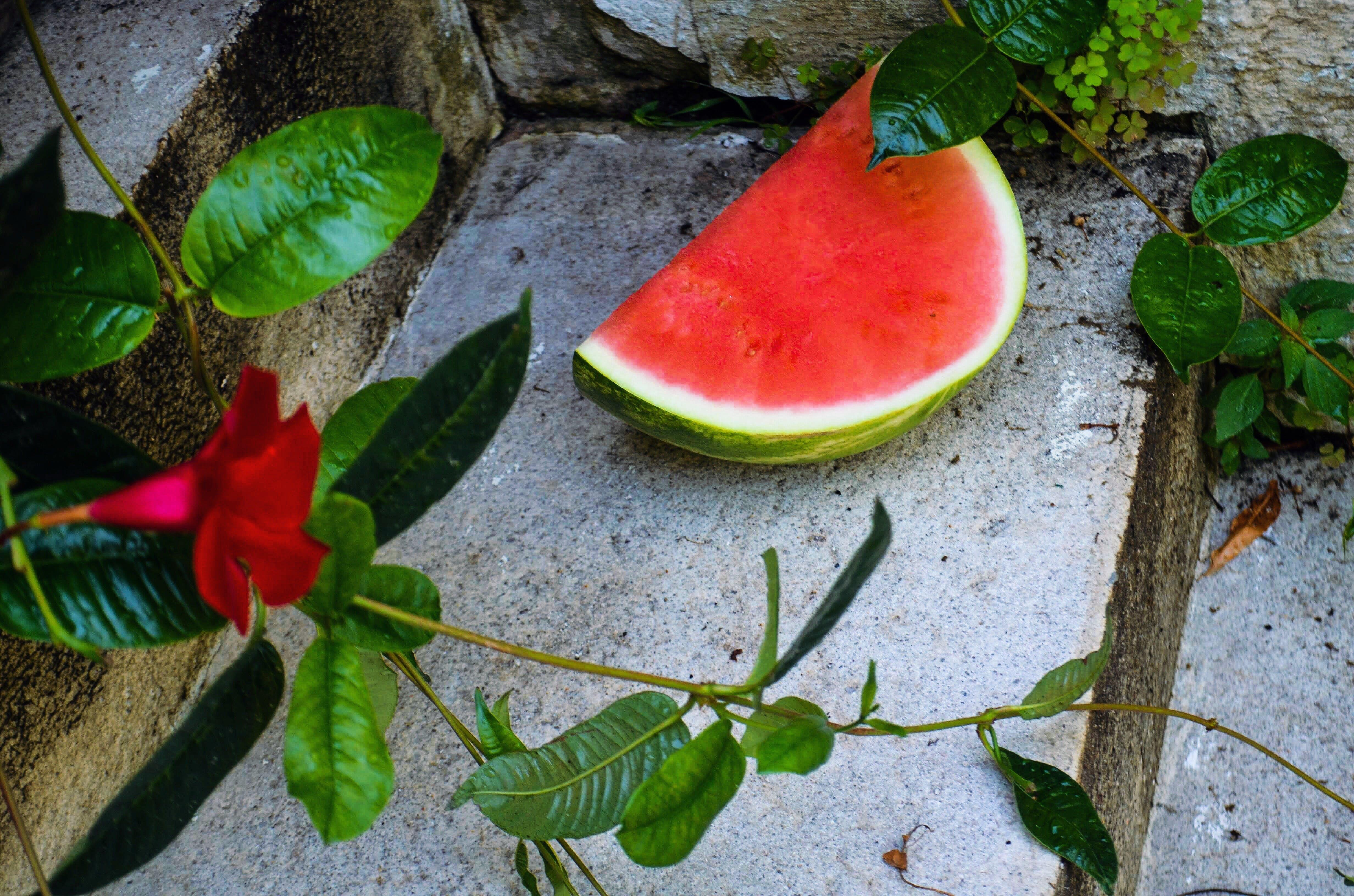 Slice Of Watermelon Beside Green Leafed Plants