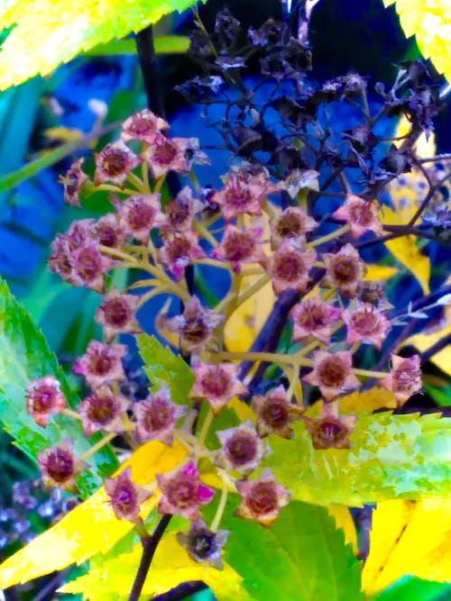 Gratis stockfoto met #flowers, #leaves, #water