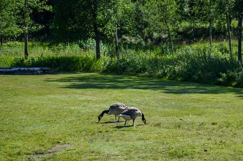 Δωρεάν στοκ φωτογραφιών με #δάσος, γρασίδι, δασικός, πράσινος