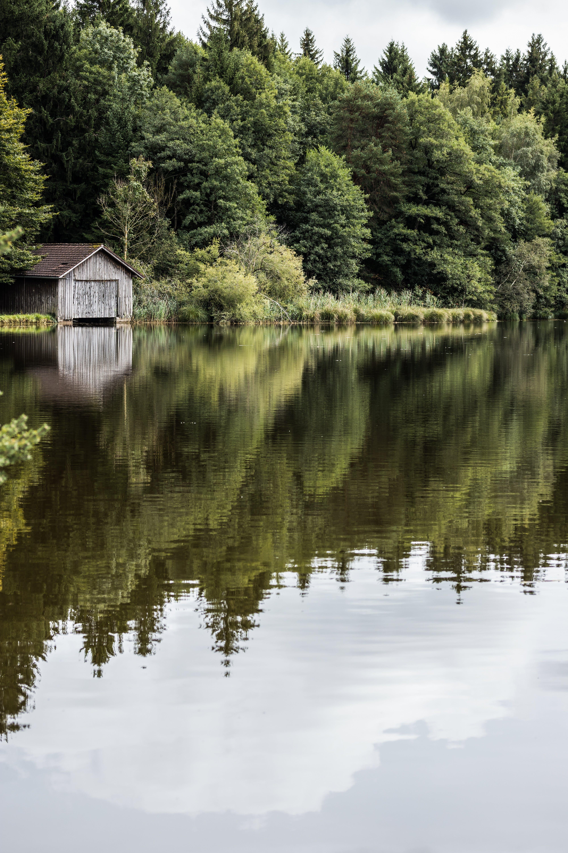 Kostenloses Stock Foto zu #wald, blick in die natur, bootshaus, gebirgssee