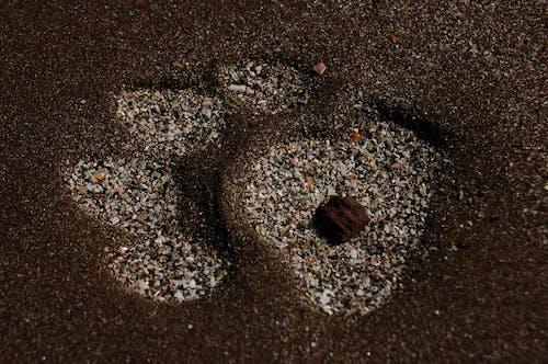 Gratis arkivbilde med #jaguar, #sand