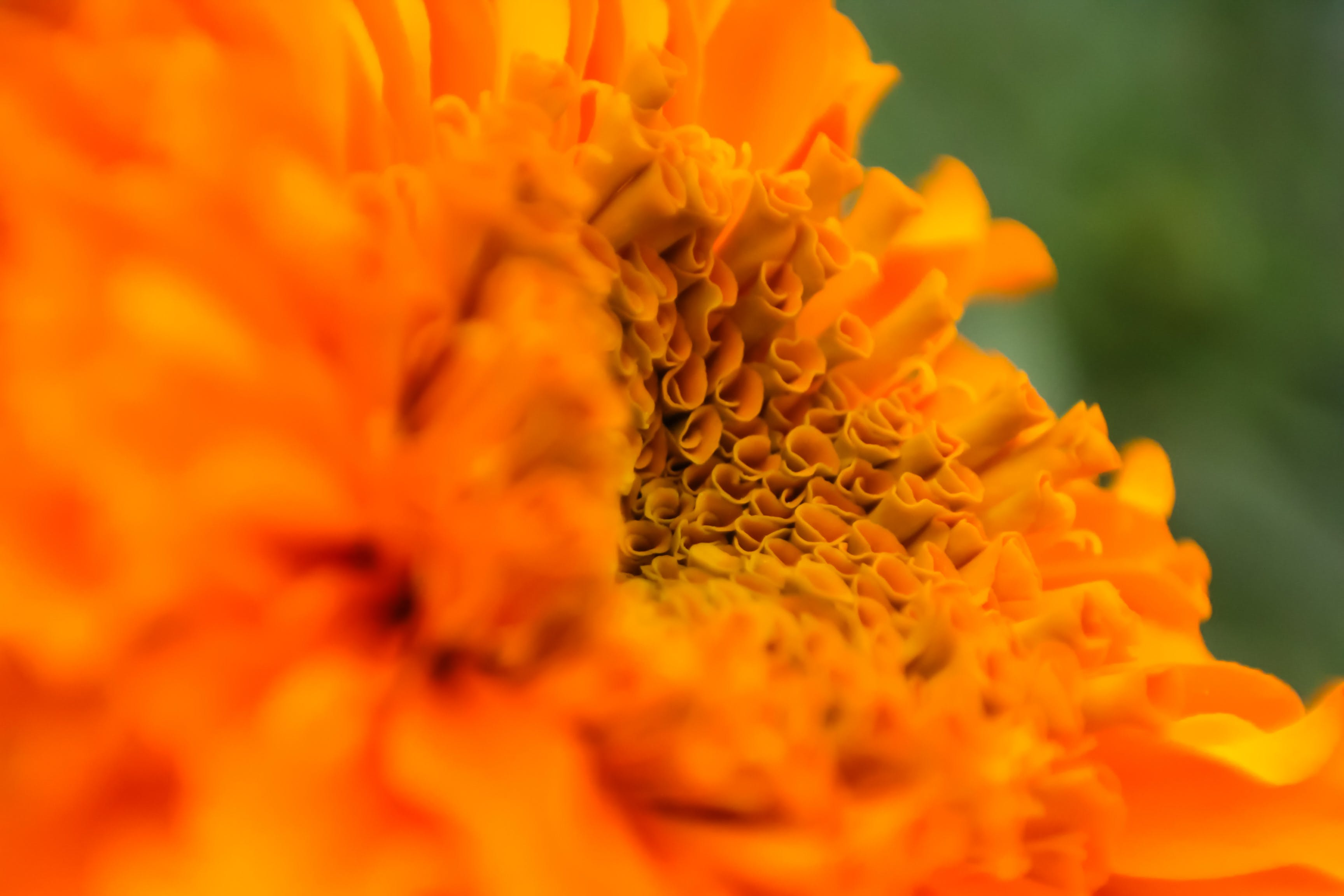 Free stock photo of beautiful flowers, close up, colour, depth of field