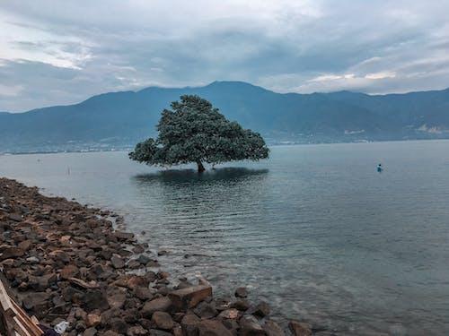 #나무, 바다, 바다에서의 남자, 빈티지의 무료 스톡 사진