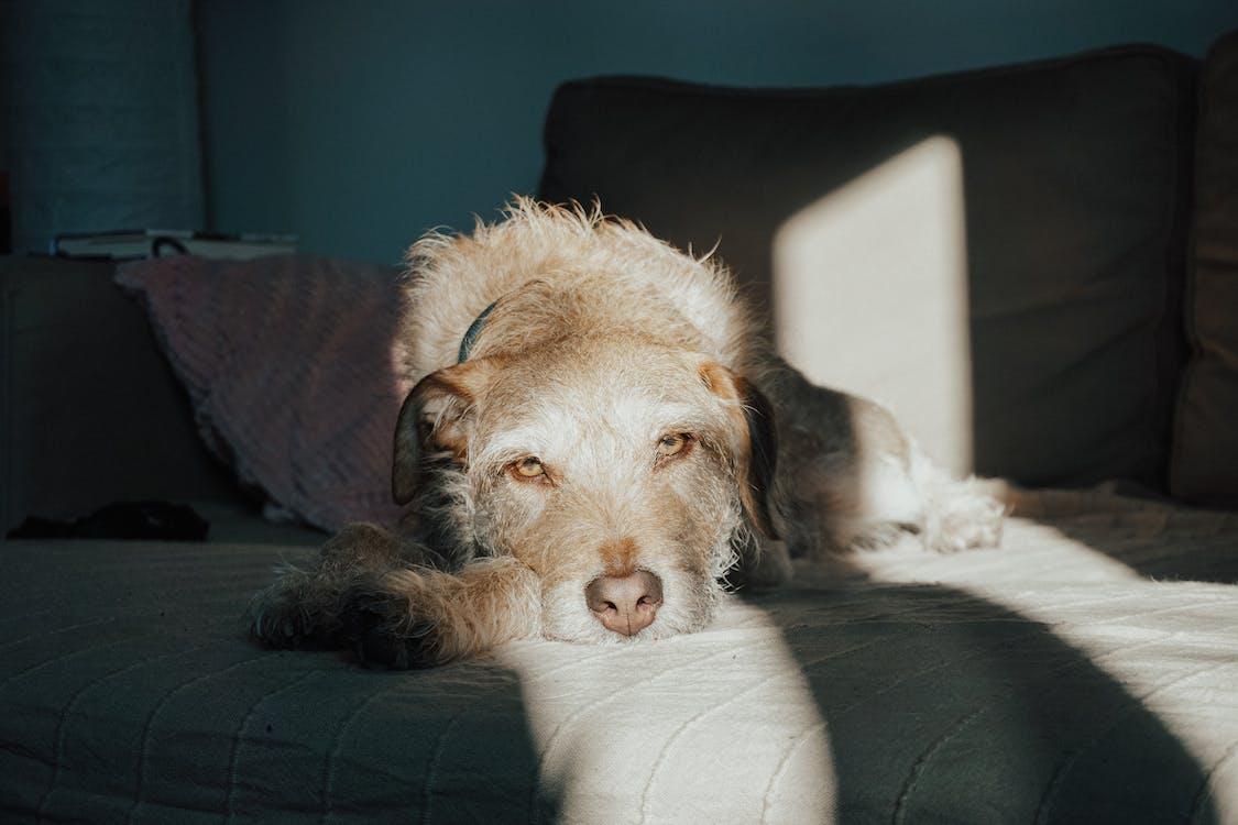 auringonvalo, eläin, koira