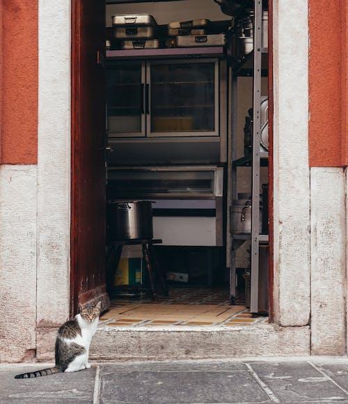 Ingyenes stockfotó cica, kiscicák, kóbor macska, konyha témában