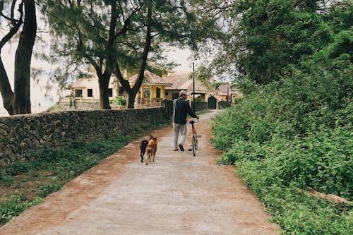 Ảnh lưu trữ miễn phí về chó, chó và người, loài chó, mục đích chó