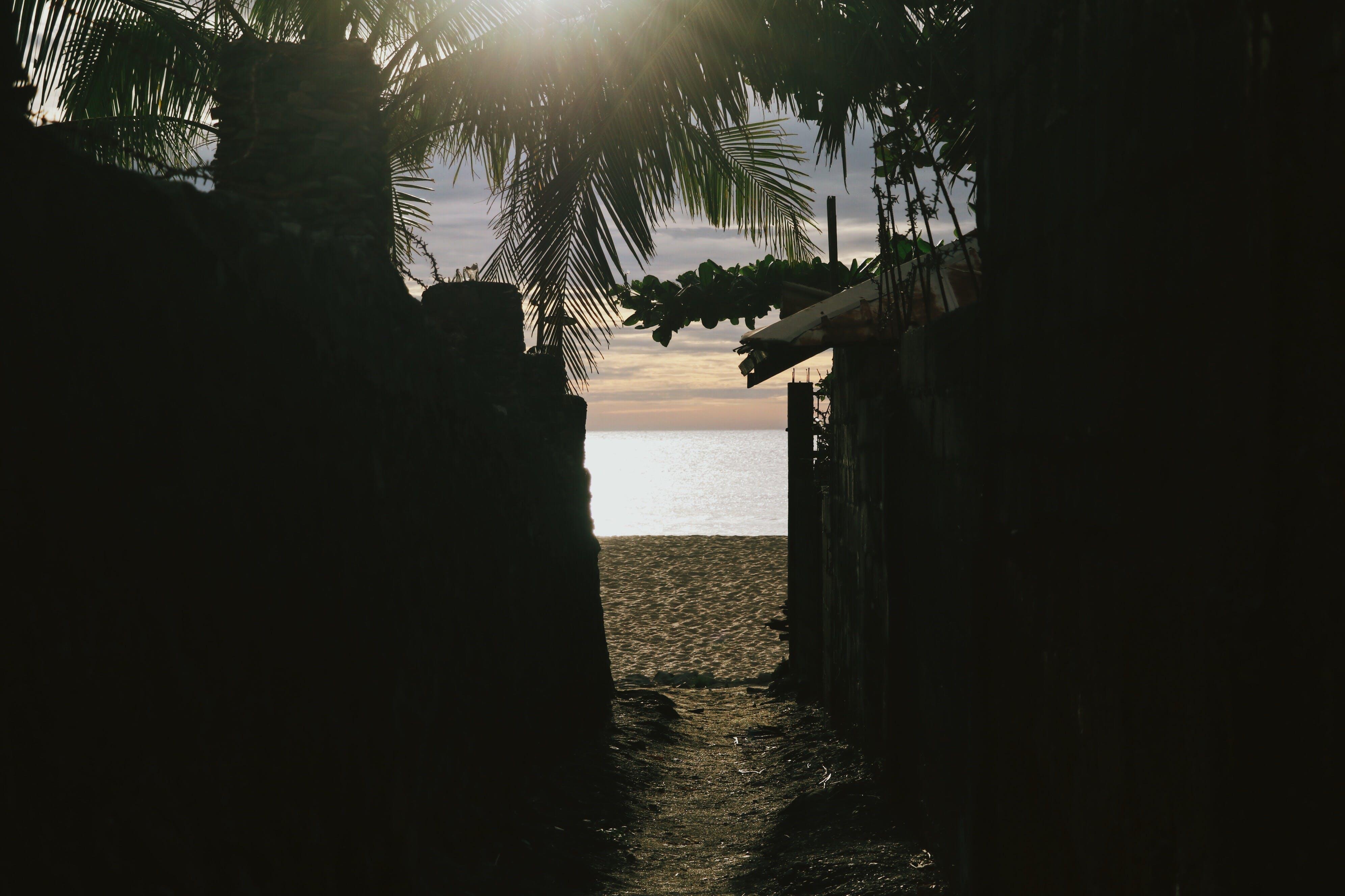 Free stock photo of nature, sunset, beach, beach view