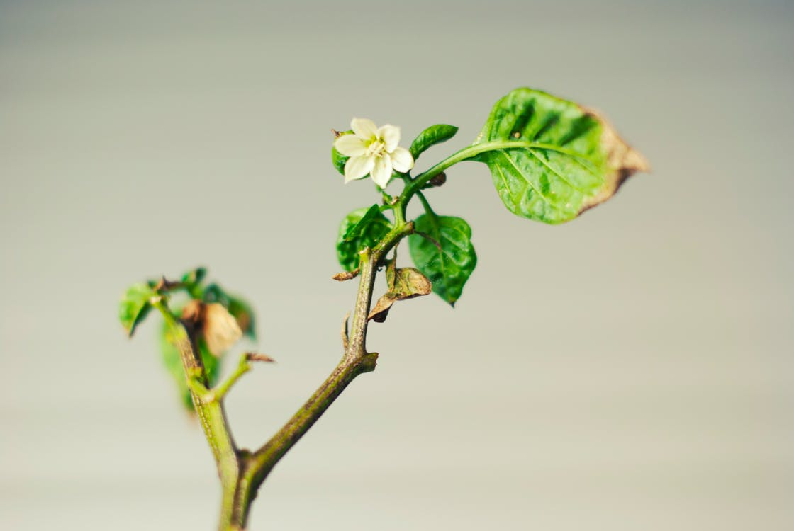 branch, flower, green