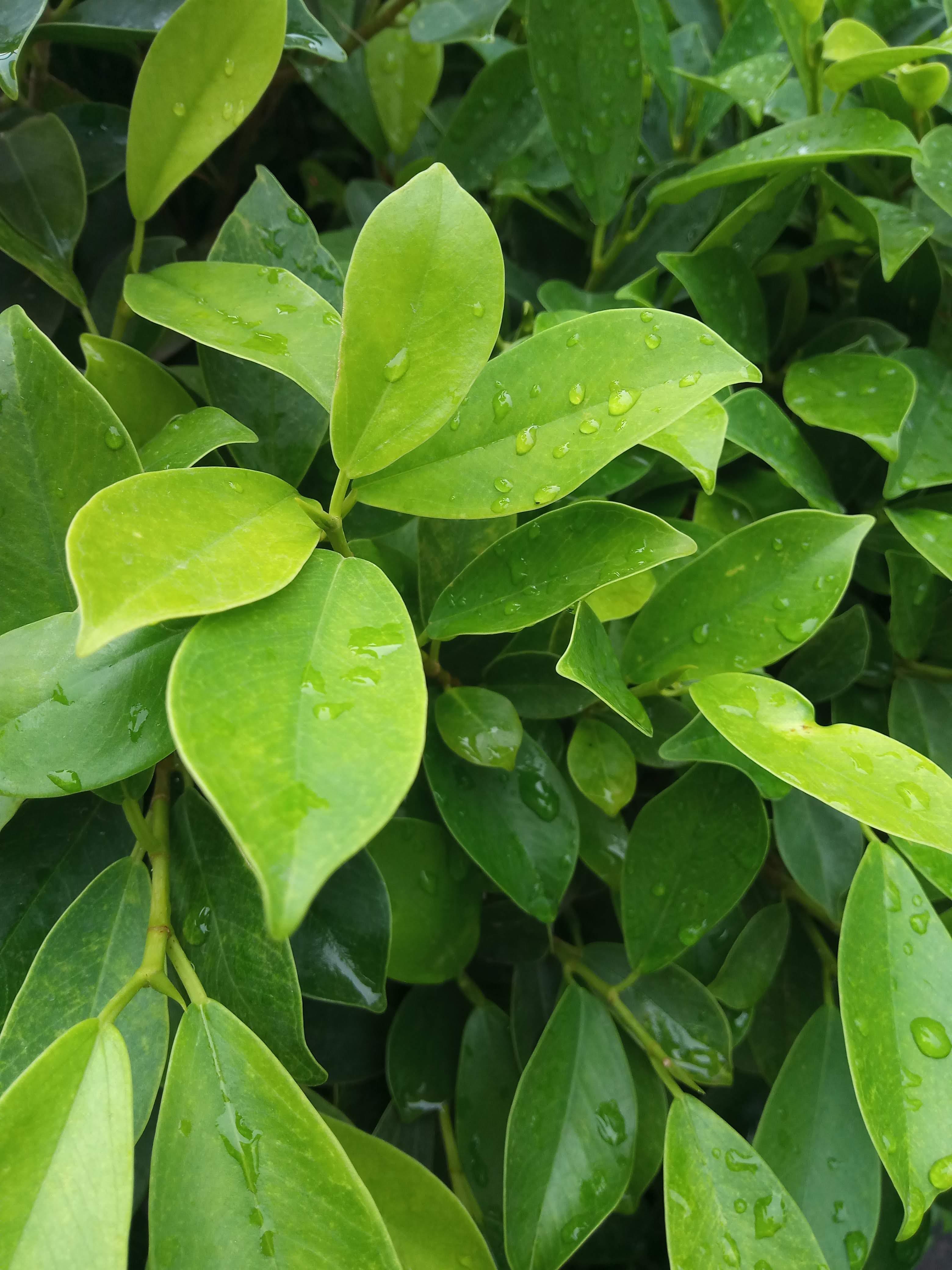 Free stock photo of droplets, drops, garden, garden plant
