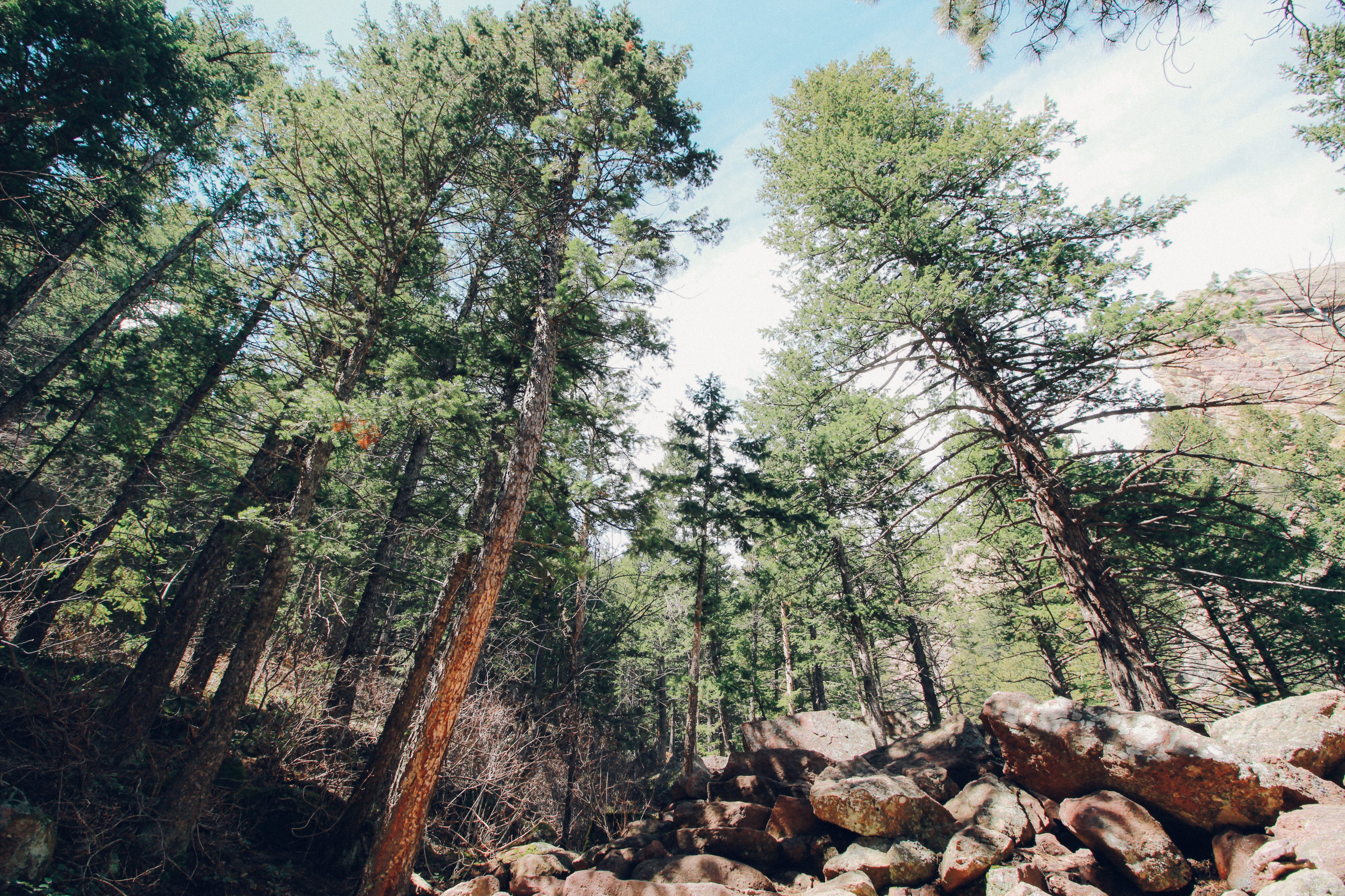 Free stock photo of camping, canopy, colorado, forest