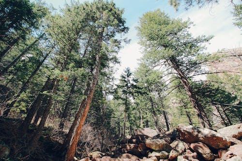 Foto profissional grátis de acampamento, amor da natureza, árvore, árvores