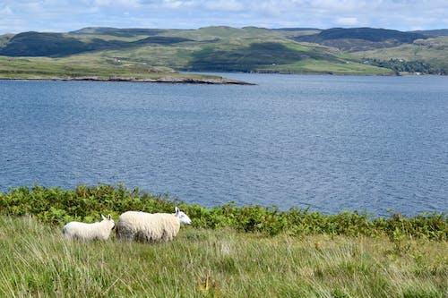 Free stock photo of freshwater, freshwater lake, highlands