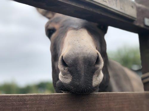 Free stock photo of animal photography, donkey, farm